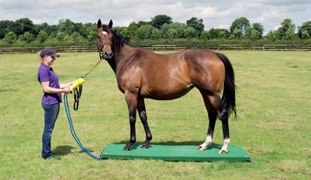 horse-weigh